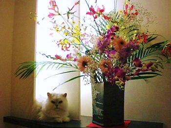 花とぎん.JPG