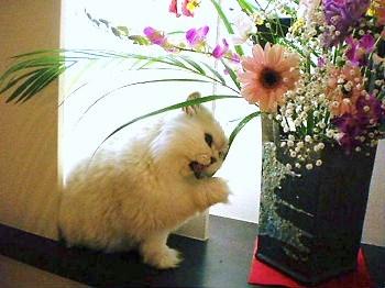 花とぎん2.JPG